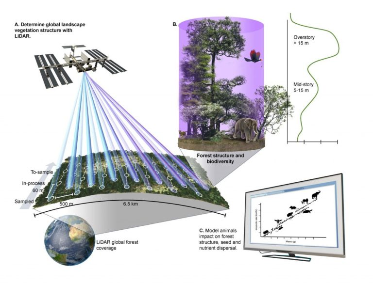 Figure from journal article showing process of using remote sensing data to model ecological processes