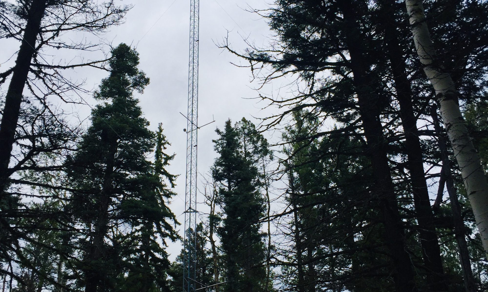 Picture of flux tower in Ponderosa Pine forest