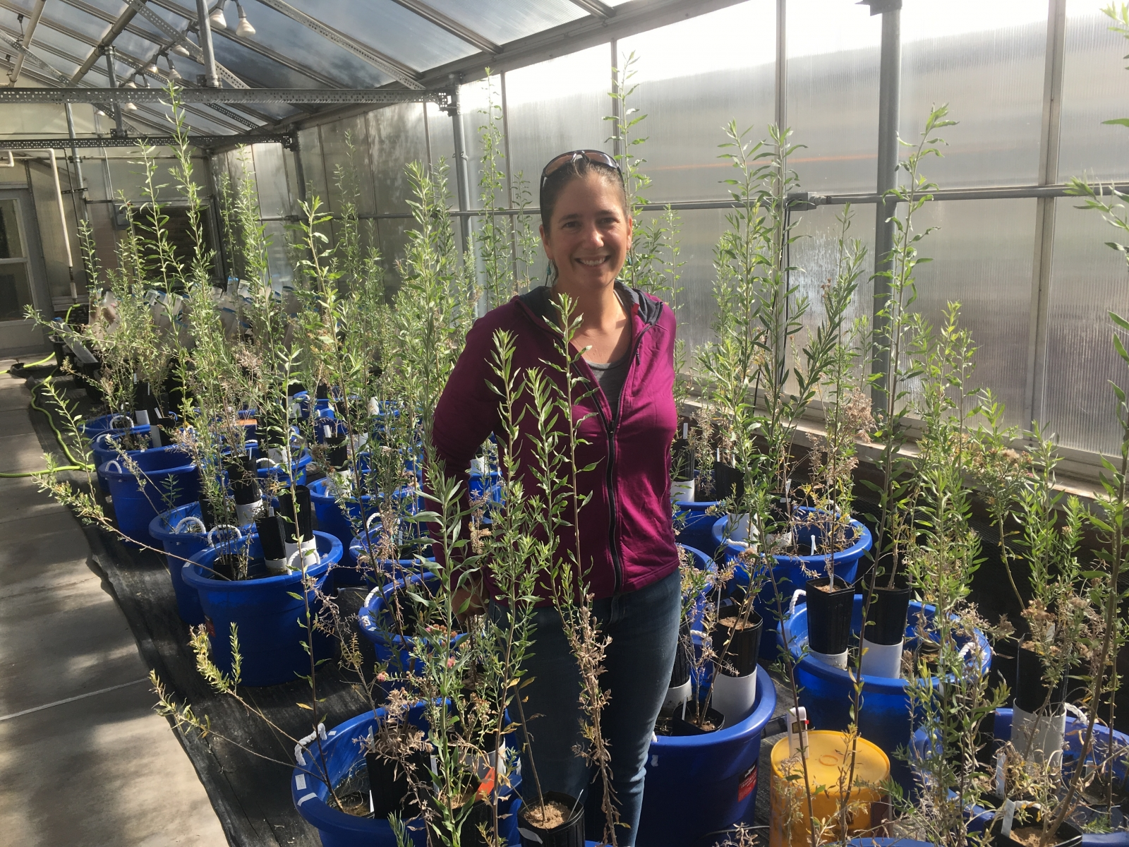 Picture of student in greenhouse surrounded by plants