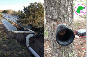 """2 pictures side-by-side of an ecological experiment and the """"flux puppy"""" logo."""