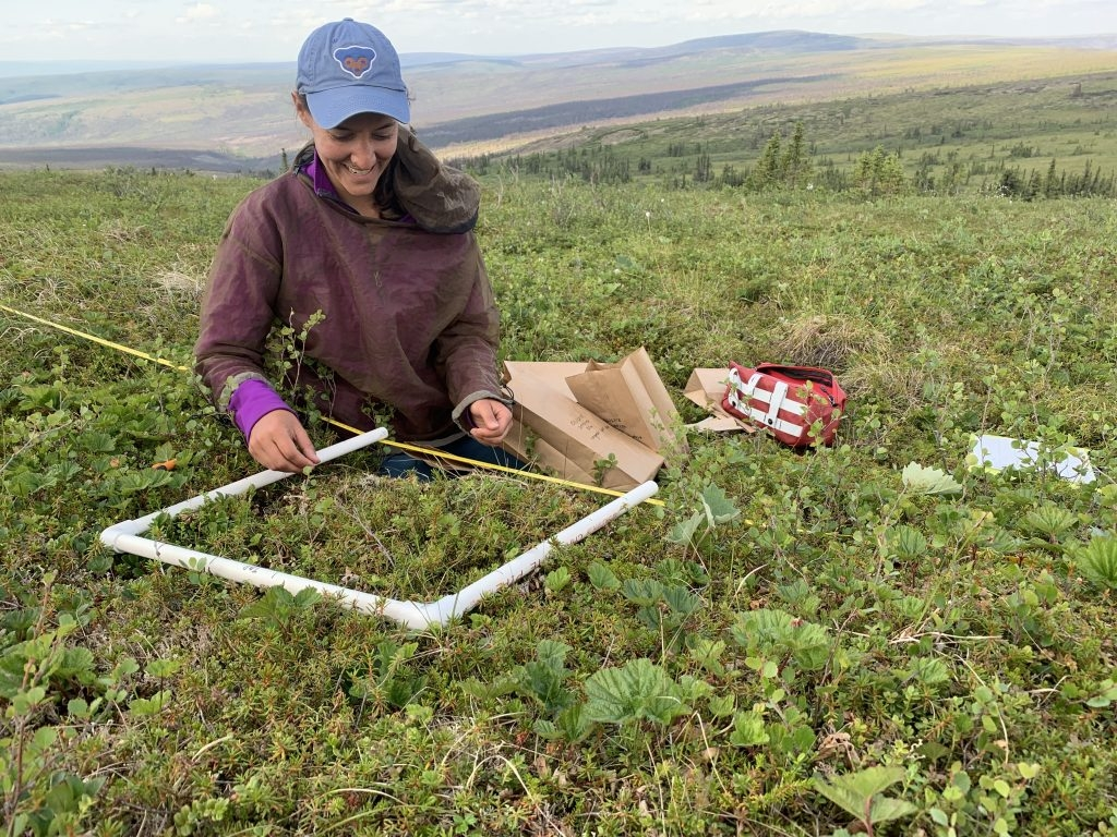 Graduate student conducts field work tundra