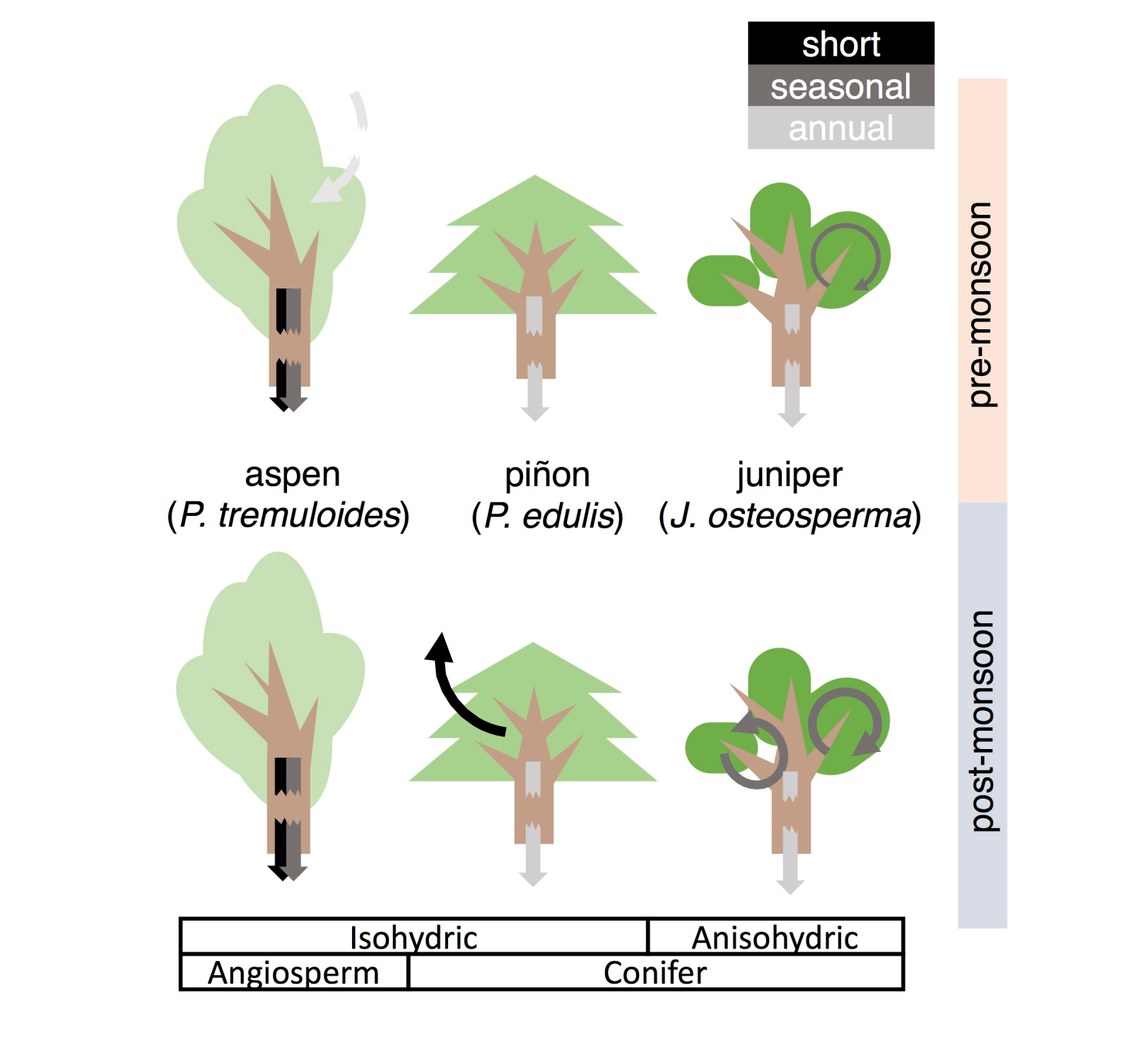 Cartoon showing three different tree species and their responses to precipitation